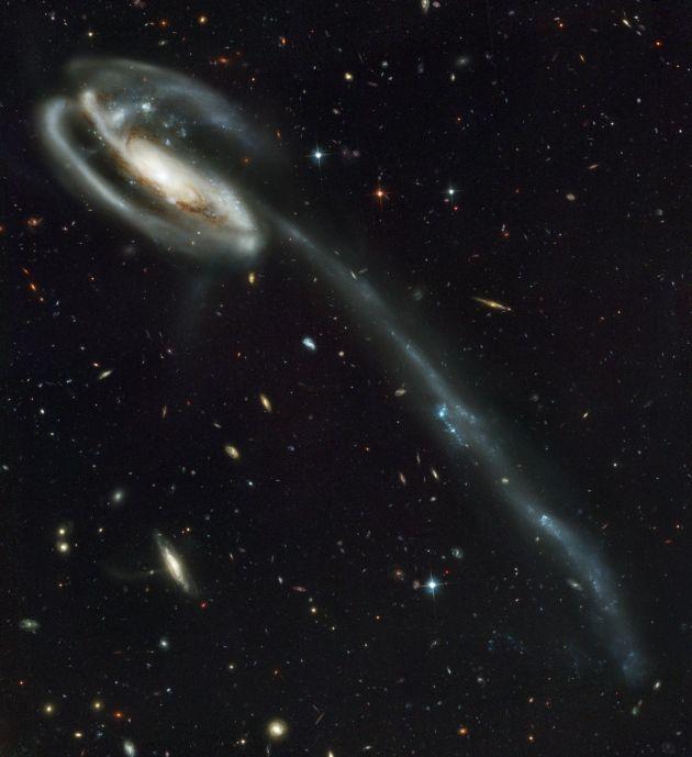 """A GALAXIA RENACUAJO Elegido por: John Grunsfeld, ex astronauta, administrador asociado de la NASA para la ciencia """"La galaxia Renacuajo ha sido interrumpida por colisiones y tiene estallidos de formación estelar a través de su cola. Pero detrás de esa galaxia hay miles de otras galaxias. Eso me muestra el poder del Hubble - no es sólo lo que el telescopio toma una foto, es todo lo demás que captura al mismo tiempo"""". Traducción realizada con el traductor www.DeepL.com/Translator"""